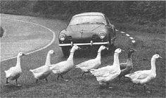 Wait! No problem. Love my Karman Ghia too much. And, ducks. . .