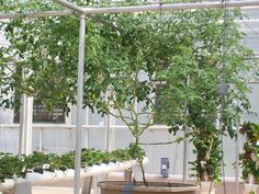 Epcot Aquaponics photo by Nephew Shawn (at the age of 13) #3