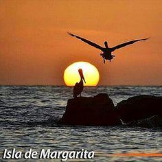 Con tan solo dar una mirada a tu alrededor te puedes dar cuenta de lo hermosa que es la vida, feliz martes amigos a disfrutar :) #amanecer  #margarita  #mundofeliz  #venezuela  #orgullo  #nacional #gaviota  #pelicano #playa #mar @mundofeliz1