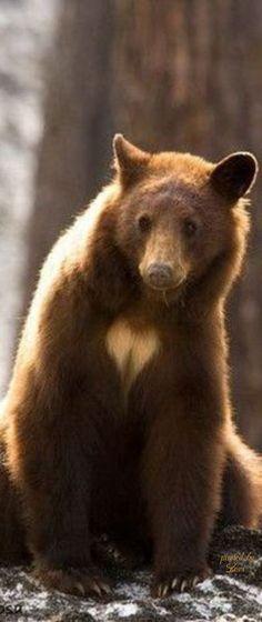 Ебут ирину медведь