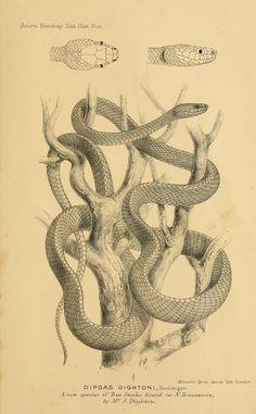 Reptile - Snake - Bombay