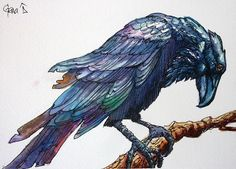 In the Company of Crows and Ravens   Tim Horton's Raven