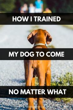 Puppies Tips, Cute Dogs And Puppies, Doggies, Puppy Training Tips, Training Your Dog, Dog Care Tips, Pet Care, Dog School, Mo S