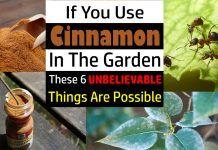 6 Unbelievable Cinnamon Uses in the Garden