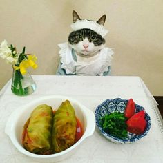 (=^x^=)˙˚०oO(i made these)  Stuffed Cabbage Rolls