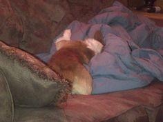 Sleepin' on papa's blanket.....