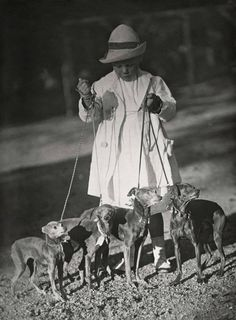 Circa 1909 Italian Greyhounds at a Dog Show in Amsterdam