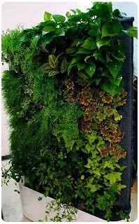 jardineriagarnica: muros verdes o jardines verticales