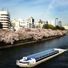 Beautiful season in Japan. Osaka