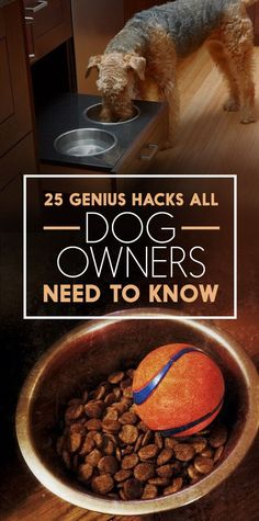 Struggling with a new pup? Check out these 5 genius hacks that make having a dog so much easier.
