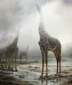 simen johan digitally constructs an imagined animal kingdom