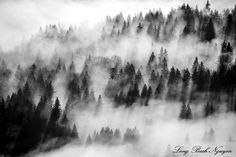 Foggy forest, Fall City, Washington by Long Bach Nguyen on 500px
