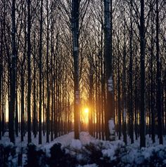 Winter sunset through the trees.