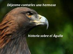 La renovación del águila 3