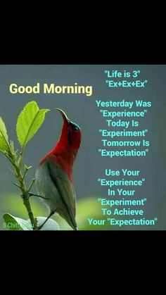 Ideas For Quotes Good Morning Positive Thoughts People Good Morning Friends Quotes, Good Morning Inspirational Quotes, Morning Greetings Quotes, Good Morning Messages, Good Morning Good Night, Good Morning Wishes, Good Morning Images, Morning Sayings, Motivational Quotes