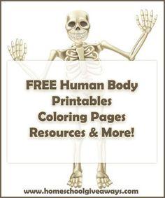 FREE human anatomy printables you may enjoy: coloring pages, lapbooks, unit studies, & more!