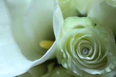 Inspired by LOVE Cabbage, Weddings, Inspired, Vegetables, Rose, Flowers, Plants, Inspiration, Biblical Inspiration