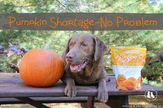 Pumpkin Shortage-No Problem With Grandma Lucy's Organic Dog Treats