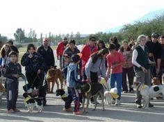 El objetivo puesto en la protección de animales - Infomerlo.com