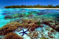 Great barrier reef- Austraila