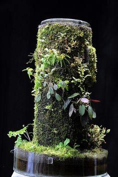 Succulent Planter Diy, Diy Planters, Planting Succulents, Moss Garden, Bonsai Garden, Garden Plants, Musgo Sphagnum, Tropical Terrariums, Mini Orquideas