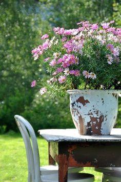Pink Garden, Summer Garden, Container Plants, Container Gardening, Vegetable Gardening, Beautiful Gardens, Beautiful Flowers, Garden Gates, Hanging Baskets