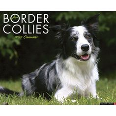 how to train a collie