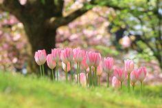 春の遠足の画像(写真)