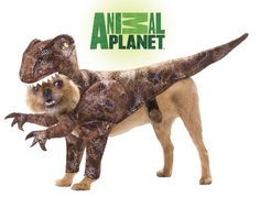 Animal Planet PET20109 Raptor Dog Costume, Small Animal Planet http://www.amazon.com/dp/B004ZKU3NK/ref=cm_sw_r_pi_dp_R9dfxb0BWZ9TJ  50 each