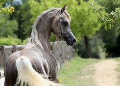 Image uploaded by Gloria. Find images and videos about horse on We Heart It - the app to get lost in what you love.
