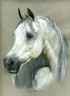 Gray wonder..................beautiful.