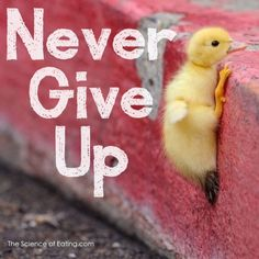 #motivation Never Give Up! So #cute