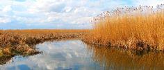 Parcul Natural Comana  Rezervatia Comana, uneste intr-un singur parc natural Rezervatia Naturala de Ghimpe (ruscus aculeatus), Rezervatia Stiintifica de Bujor (paeonia peregrina) si Balta Comana. La o distanta relativ mica de Bucuresti, aceasta constituie o oaza de relaxare, o metoda de a evada din cotidian. Istorie Parcul Comana a luat nastere in anul 2004, cand pe langa cele doua rezervatii: de Bujor si de Ghimpe , in baza documentatiilor stiintifice s-a alaturat rezervatiei si Balta… Cool Places To Visit, Wander, The Good Place, Country Roads, Mountains, Travel, Beautiful, Park, Viajes
