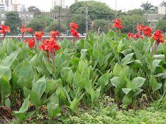 Será que consigo criar essa flor na minha sacada?? #FlorUrbana #Jardinagem #Garden