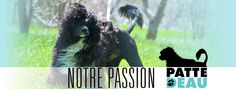 entete passion Spa Design, Passion, Dogs, Animals, Portuguese Water Dog, Animales, Animaux, Doggies, Animal