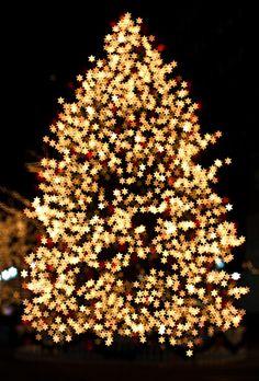 twinkling christmas tree lights christmas tree lights on pinterest. Black Bedroom Furniture Sets. Home Design Ideas
