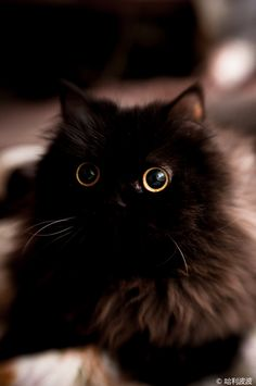 surprised black kitten