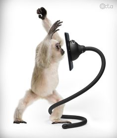 Monkey with an iPad mini and a TabletTail: Monkey Kit  #OctaPinToWin