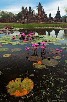 Temples and Lily Pads, Sukhothai, Thailand