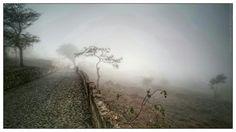 NhaCaboVerde - Fotos: Cova Figueira - Árvores na bruma