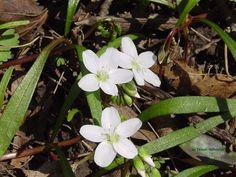 Spring Wildflowers #3
