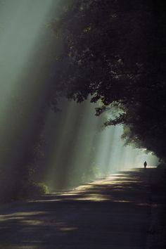 lights will guide you home..