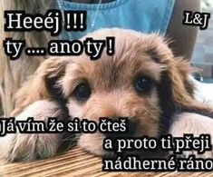 Humor, Dogs, Fun, Animals, Good Morning, Animales, Animaux, Humour, Pet Dogs