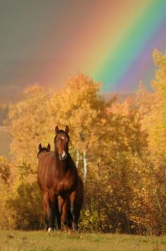 Even though Dakota is parentless she sees a rainbow at the end of the tunnel in her new life with her brother, Luke and his daughter, Savannah in Sarah Patt's novel, Because of  Savannah. www.sarahpatt.com
