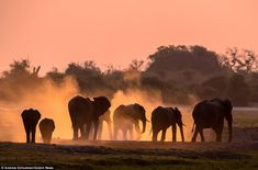 Wildlife Photography or Animal Photography : The name of the game in wildlife photography or Animal Photography whether you're trying to capture a herd of elephants on the Serengeti Plains or Wild Animals Photography, Elephant Photography, Wildlife Photography, Digital Photography, Amazing Photography, Wild Life, National Geographic Animals, Herd Of Elephants, Giraffes