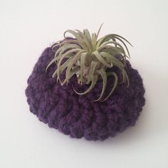 Olga Air Plant Basket // Home Decor // OOAK Crochet Display