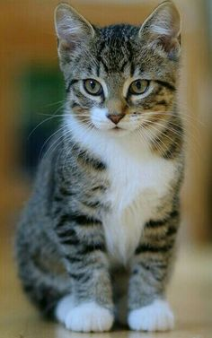 Beautiful Cats Most Pretty Find This Pin And More