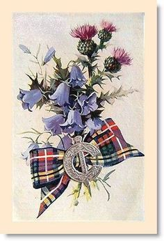 Scottish greeting card featuring thistle, bluebells and tartan. Scottish Clans, Scottish Tartans, Scottish Highlands, Scotch, Scotland History, Valentines Greetings, Celtic Art, Scotland Travel, Vintage Cards
