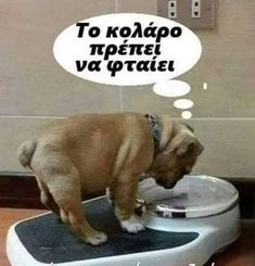 Made Goods, Funny Texts, Laughter, Lol, Greek, Photos, Animals, Decor, Humor