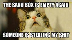 #cats #cathumor #lol